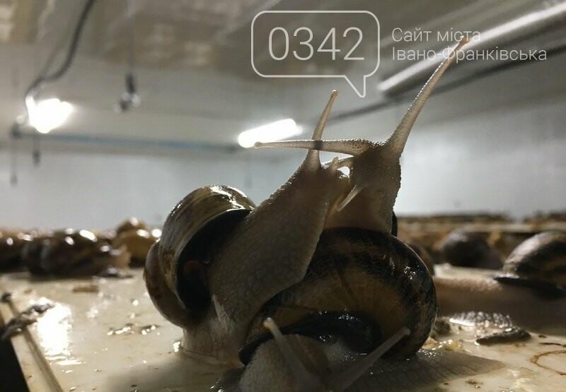 Як вирощують равликів на Прикарпатті. ФОТО, фото-2