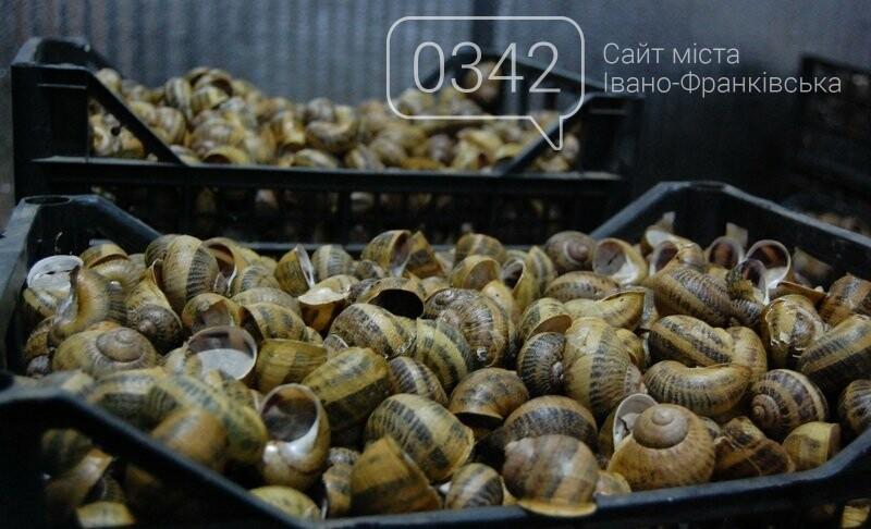 Як вирощують равликів на Прикарпатті. ФОТО, фото-3