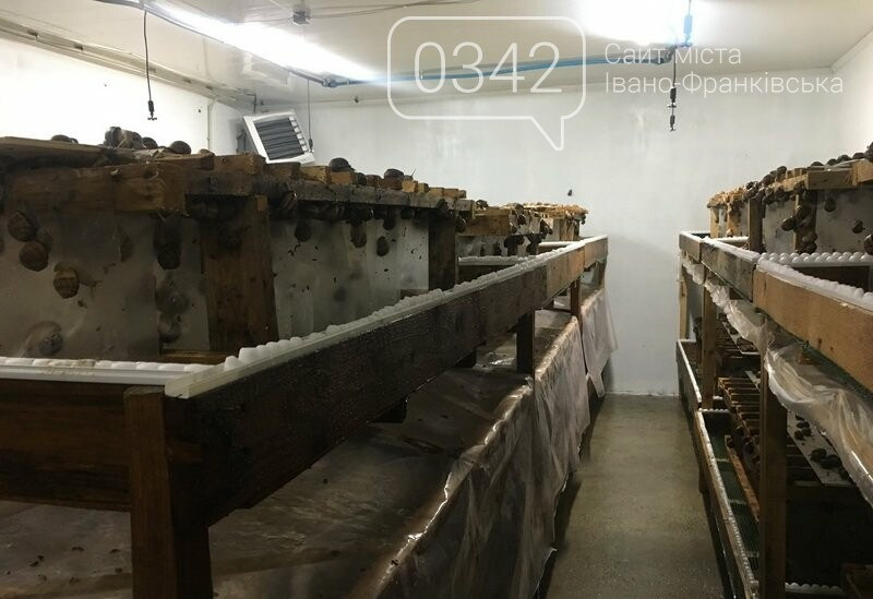 Як вирощують равликів на Прикарпатті. ФОТО, фото-4