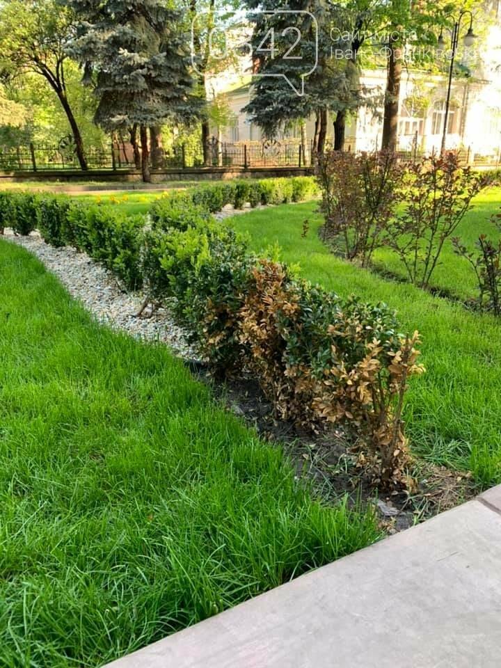 Ось такий порядок. В міському парку Шевченка невідомі позривали квіти. , фото-3