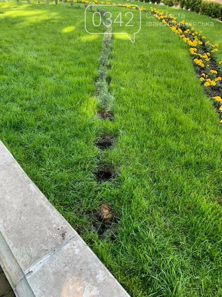 Ось такий порядок. В міському парку Шевченка невідомі позривали квіти. , фото-4