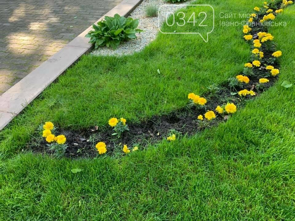 Ось такий порядок. В міському парку Шевченка невідомі позривали квіти. , фото-5