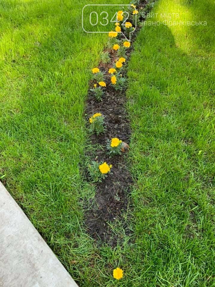 Ось такий порядок. В міському парку Шевченка невідомі позривали квіти. , фото-6