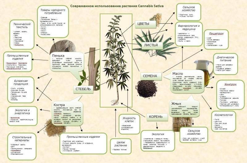 насіння конопель у виробництві