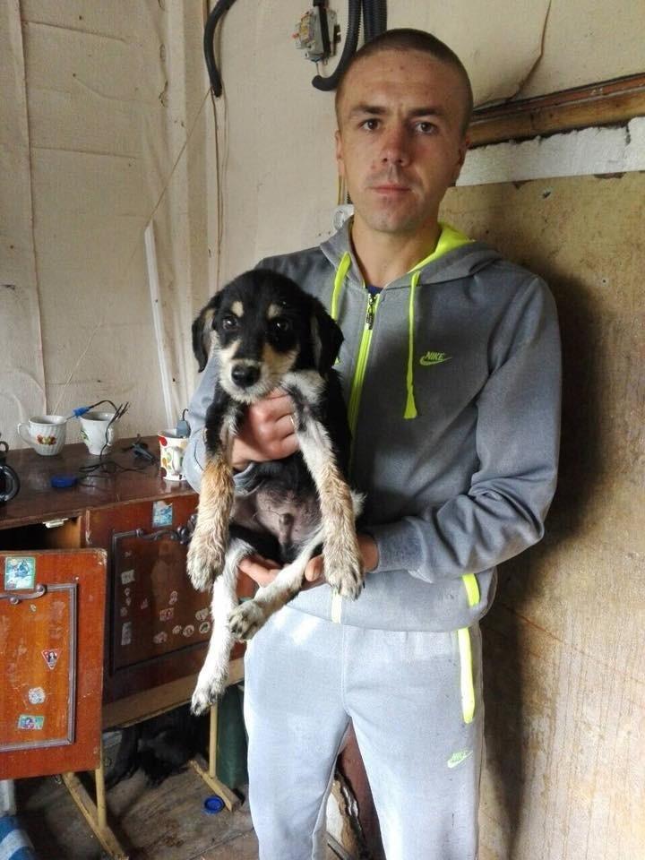 У Калуші чотири безпритульні пси знайшли свої домівки. ФОТО, фото-2
