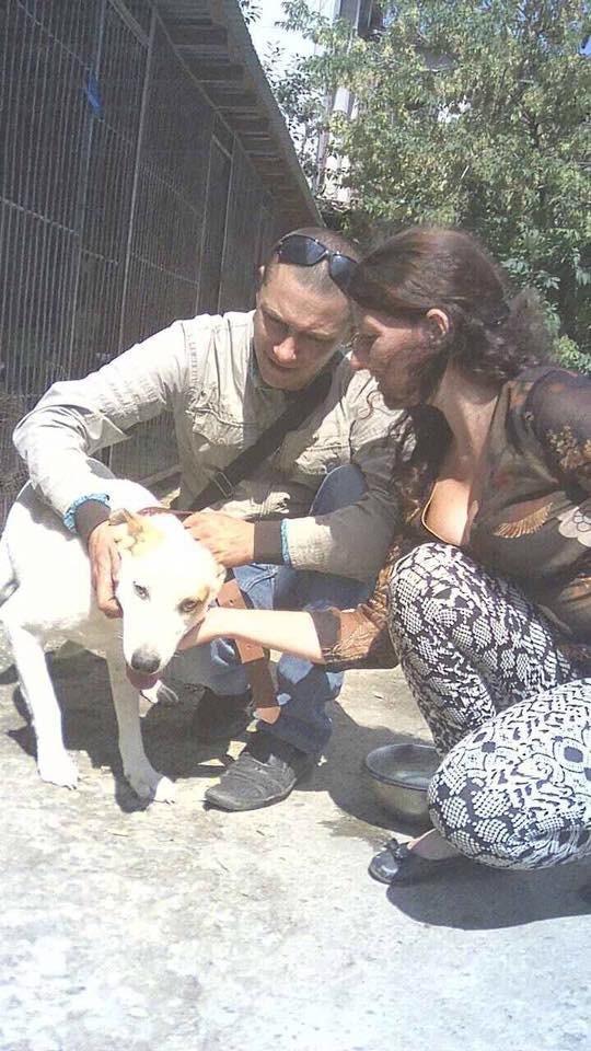 У Калуші чотири безпритульні пси знайшли свої домівки. ФОТО, фото-4