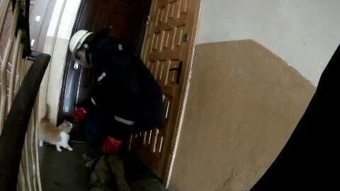 Ававрійно-рятувальна служба виїжджала у Франківську до «агресивного» котика. ФОТОФАКТ, фото-1
