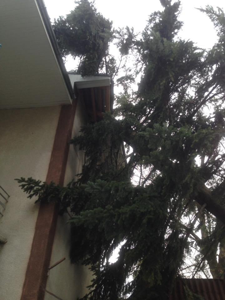 У Косові буревій повалив дерева. ФОТО, фото-1