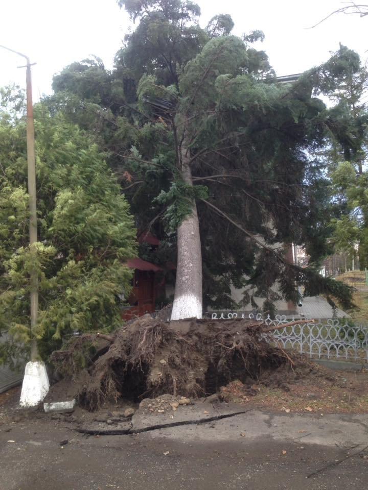 У Косові буревій повалив дерева. ФОТО, фото-2