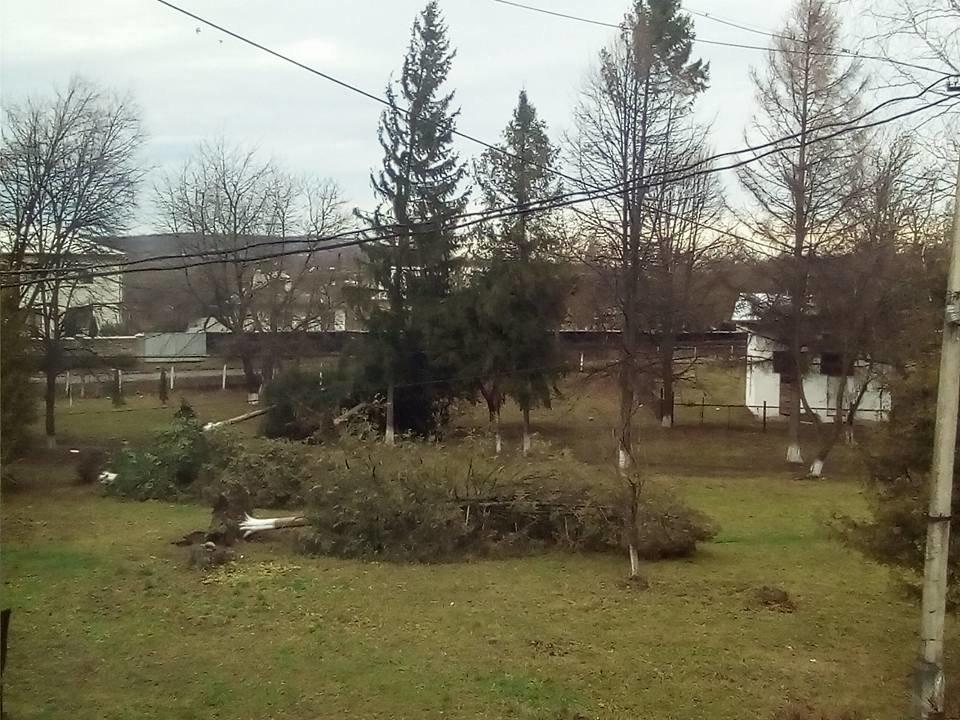 У Косові буревій повалив дерева. ФОТО, фото-4