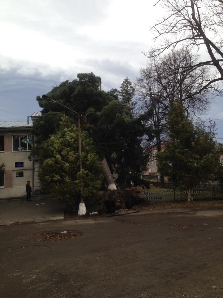 У Косові буревій повалив дерева. ФОТО, фото-3