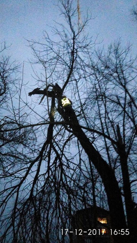 """Висотні роботи: """"Муніципальна варта"""" зрізала гілку та ремонтувала дах. ФОТО, фото-6"""