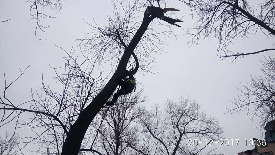 """Висотні роботи: """"Муніципальна варта"""" зрізала гілку та ремонтувала дах. ФОТО, фото-5"""