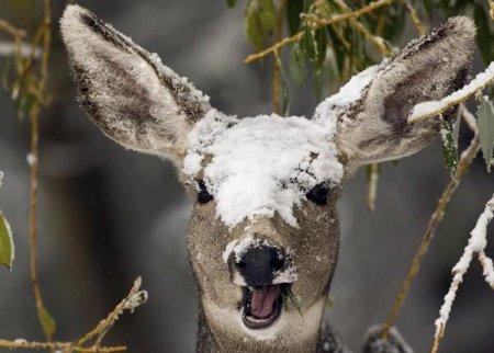 У лісах Прикарпаття підгодовуватимуть тварин, фото-1