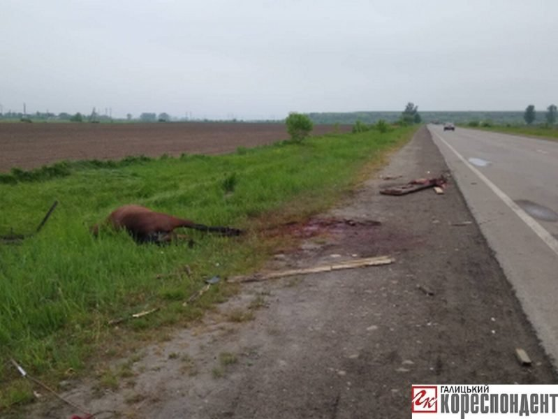 У ДТП на Прикарпатті загинув кінь. ФОТО. ОНОВЛЕНО, фото-4