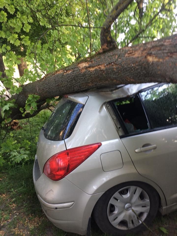 У Франківську дерево впало на автомобіль із людьми. ФОТО. ОНОВЛЕНО, фото-4