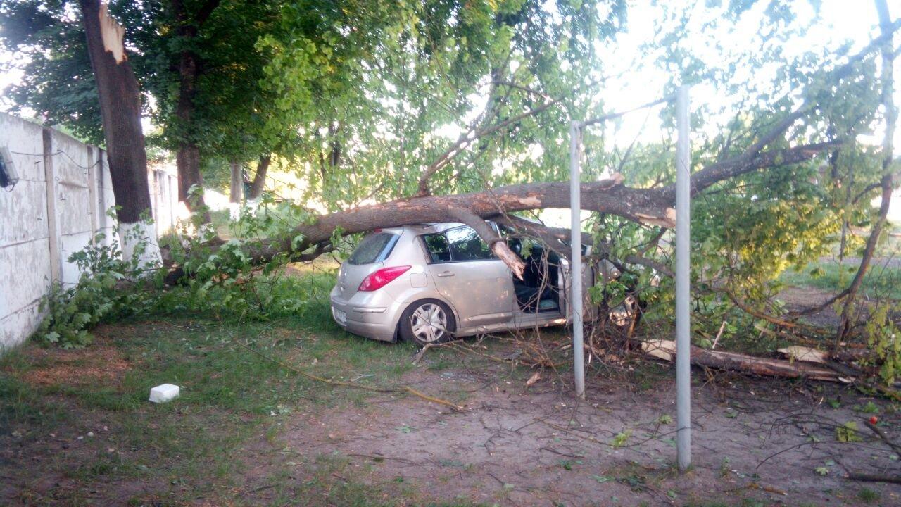 У Франківську дерево впало на автомобіль із людьми. ФОТО. ОНОВЛЕНО, фото-1