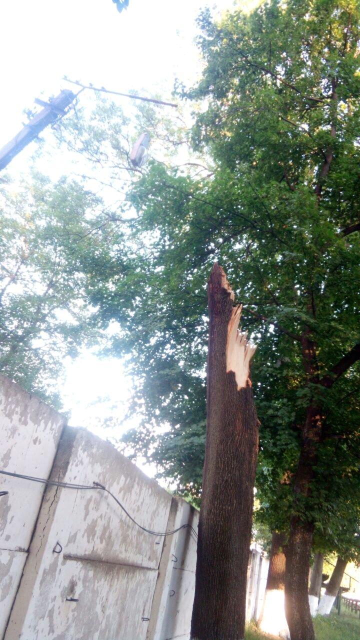 У Франківську дерево впало на автомобіль із людьми. ФОТО. ОНОВЛЕНО, фото-2