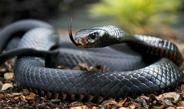 Через укус змії прикарпатець майже добу – у реанімації, фото-1