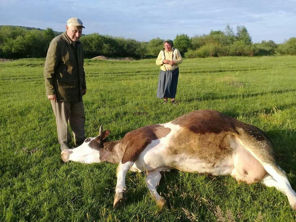 На Прикарпатті масово отруїлась худоба, люди звинувачують агрохолдинг. ФОТО. ОНОВЛЕНО, фото-1