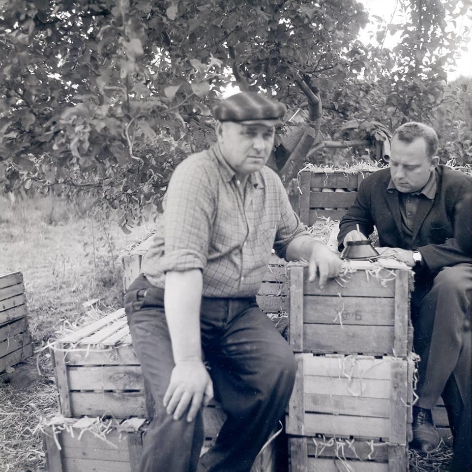 Прикарпатська агроромантика: як у 1960-х яблука збирали. ФОТО, фото-3