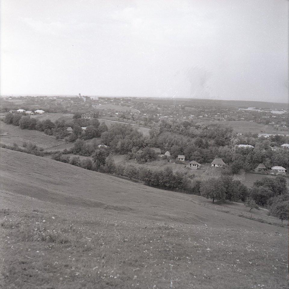 Прикарпатська агроромантика: як у 1960-х яблука збирали. ФОТО, фото-6