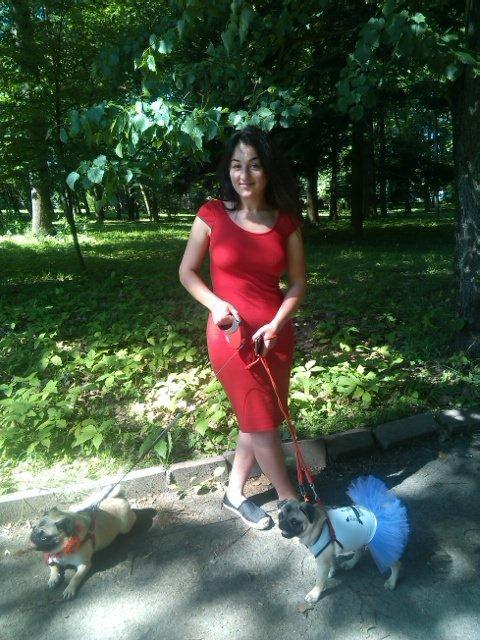 Найкумедніші з собак. МопсДень у Франківську. ФОТО, фото-6
