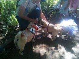Найкумедніші з собак. МопсДень у Франківську. ФОТО, фото-2