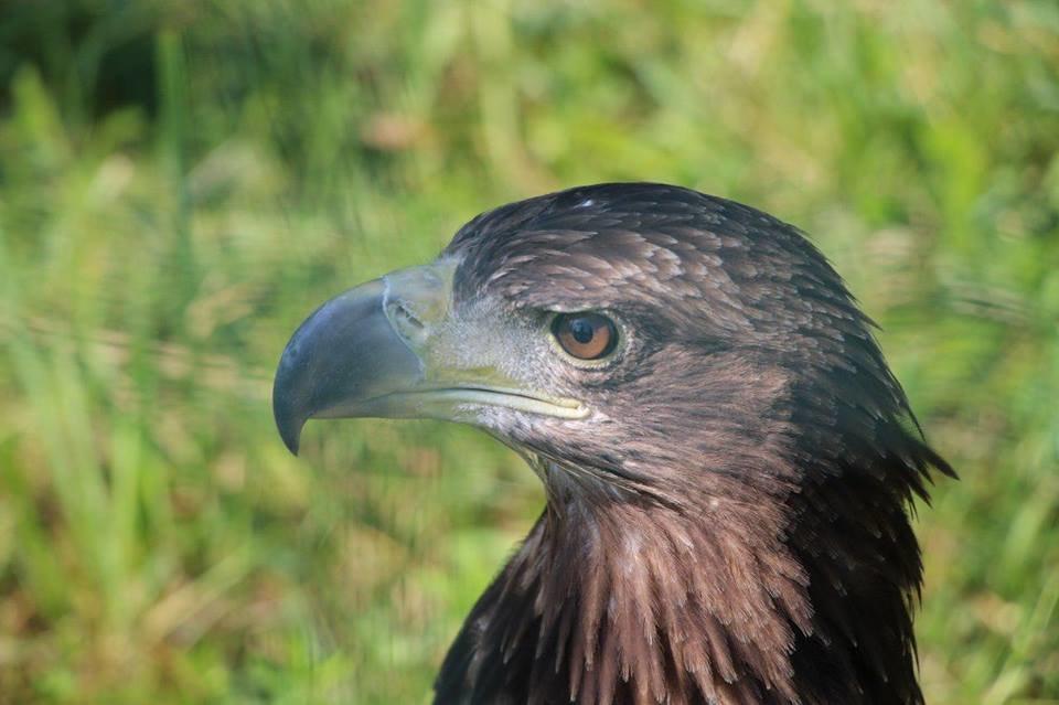Двох червонокнижних птахів активісти врятували із неволі на Прикарпатті. ФОТО, фото-1