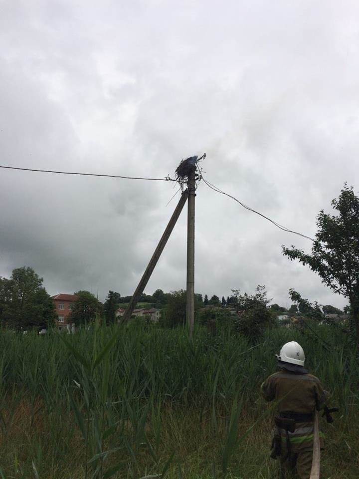 Коротке замикання. На Прикарпатті згоріло гніздо лелек. ФОТОФАКТ, фото-1