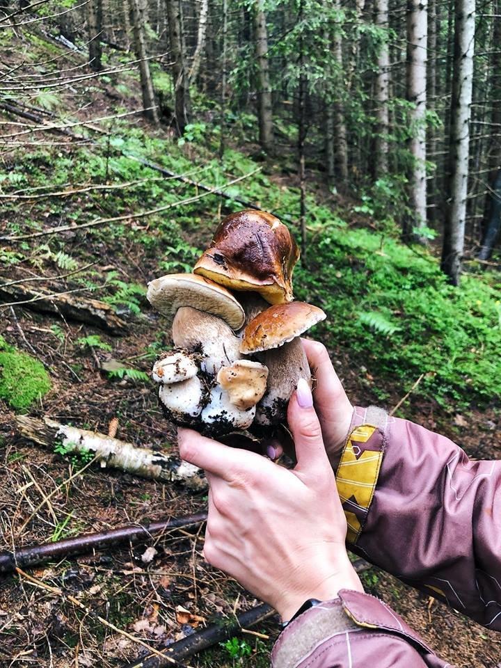 Шокуюча грибарка на Прикарпатті: майже сотня кілограмів білих грибів. ФОТО, фото-2