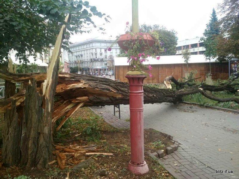 Сильний вітер у Франківську: на Вічевому майдані впало дерево. ФОТО, фото-3