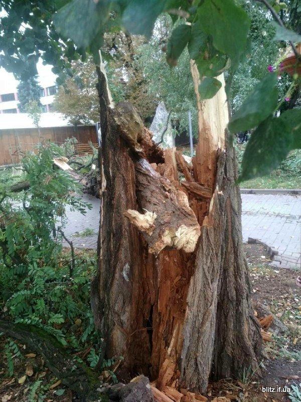 Сильний вітер у Франківську: на Вічевому майдані впало дерево. ФОТО, фото-2