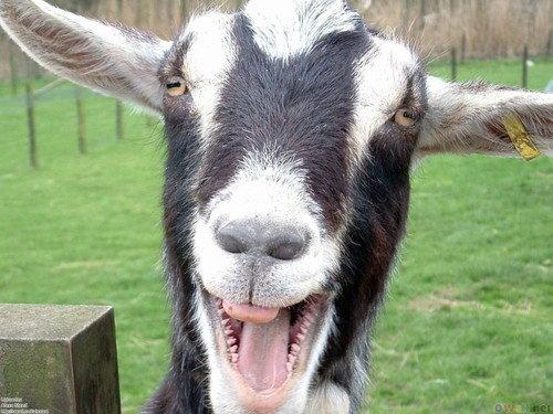 Картинки по запросу сказ кози