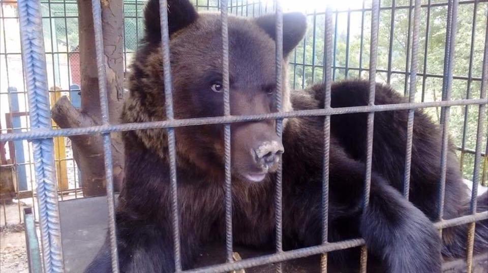 У одному із відпочинкових комплексів Прикарпаття на дівчину напав ведмідь, фото-3