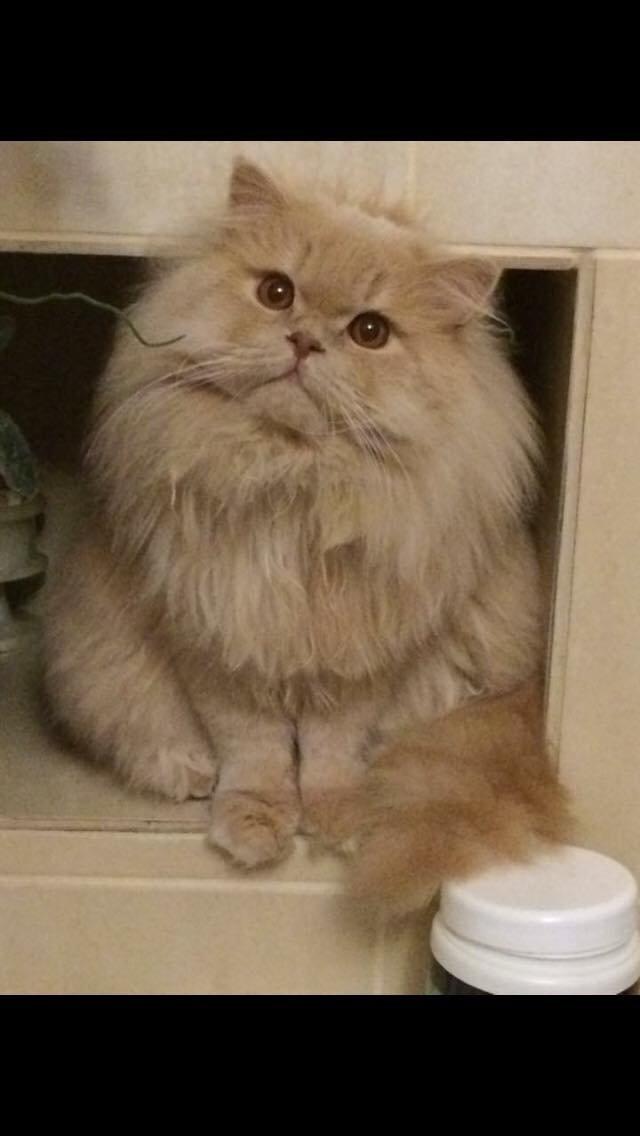 Злодії обікрали квартиру захвативши з собою навіть кота, фото-1