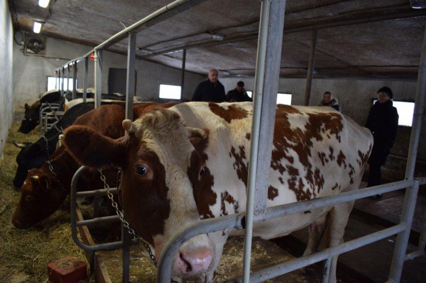 На Прикарпатті відкрили сімейну ферму, фото-2