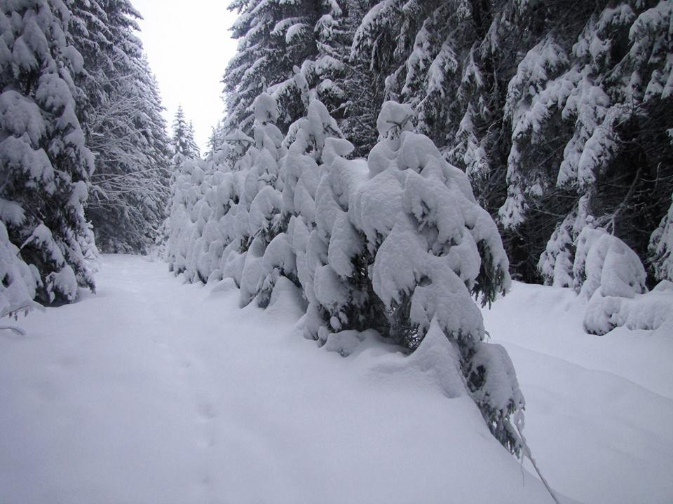 Штормове попередження - загроза сходження лавин в горах, фото-1