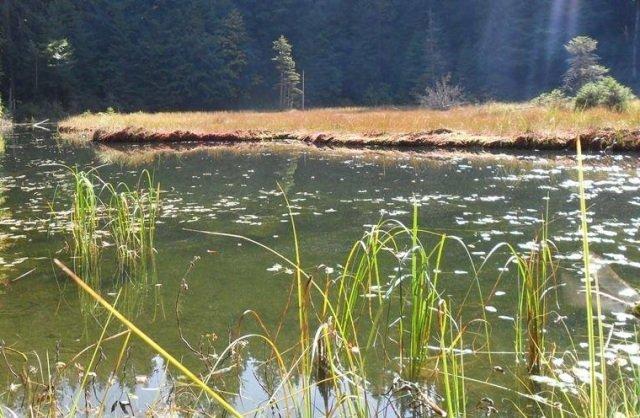 Озеро Дике (Озірце) - міні-копія Синевирського озера, фото-5