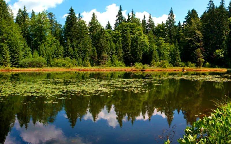 Озеро Дике (Озірце) - міні-копія Синевирського озера, фото-1