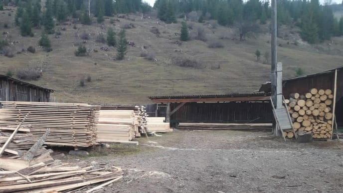 На Прикарпатті СБУ запобігла експорту зрубаного лісу на мільйони гривень, фото-3