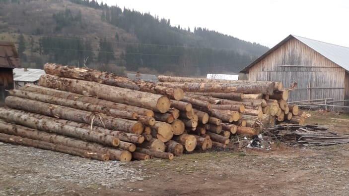 На Прикарпатті СБУ запобігла експорту зрубаного лісу на мільйони гривень, фото-4