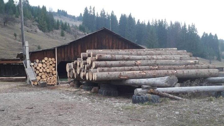 На Прикарпатті СБУ запобігла експорту зрубаного лісу на мільйони гривень, фото-5