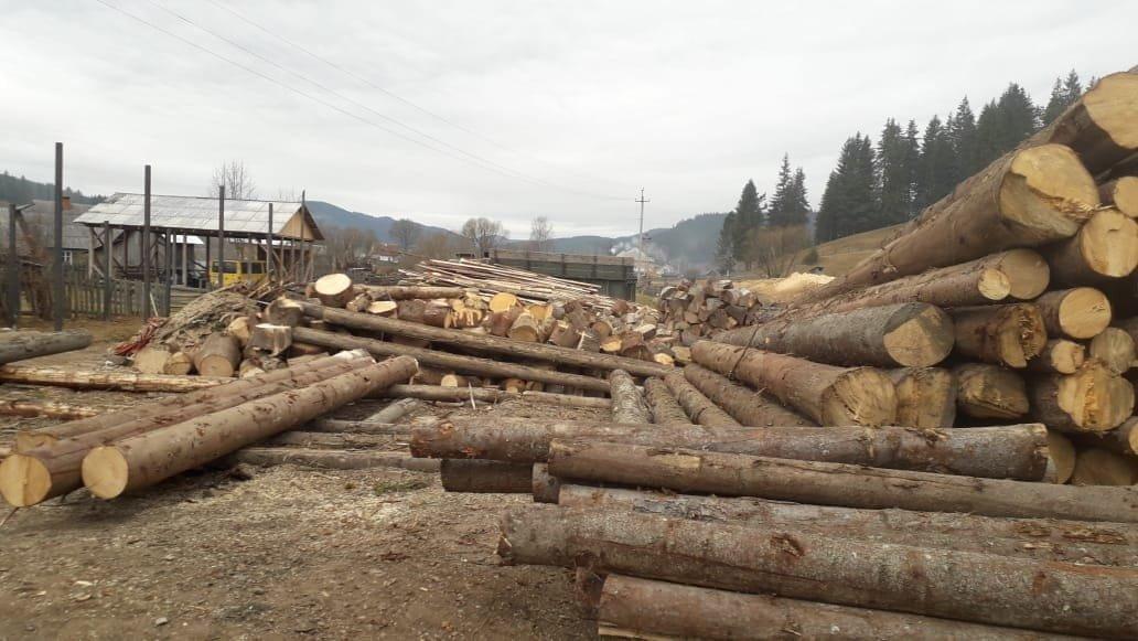 На Прикарпатті СБУ запобігла експорту зрубаного лісу на мільйони гривень, фото-7