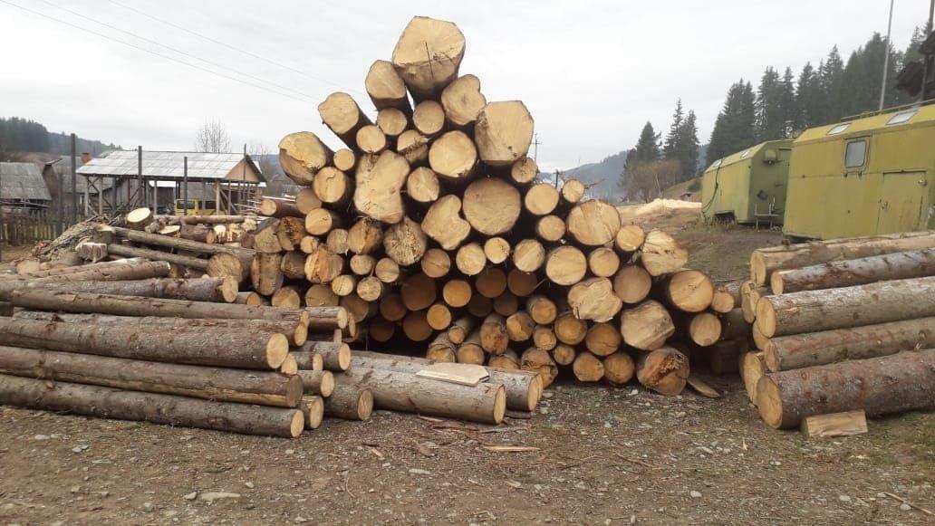 На Прикарпатті СБУ запобігла експорту зрубаного лісу на мільйони гривень, фото-8