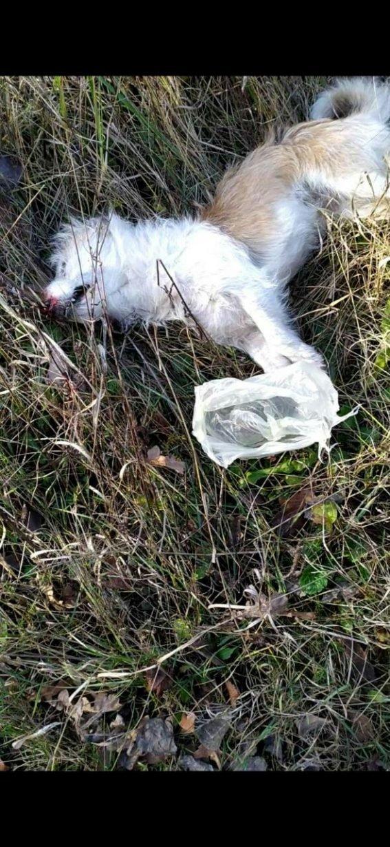 Невмотивована жорстокість. На Прикарпатті з рушниці розстрілювали собак (фото), фото-4