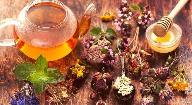 Карпатські трав'яні та квіткові чаї. Цілющі властивості з запахом гір, фото-3