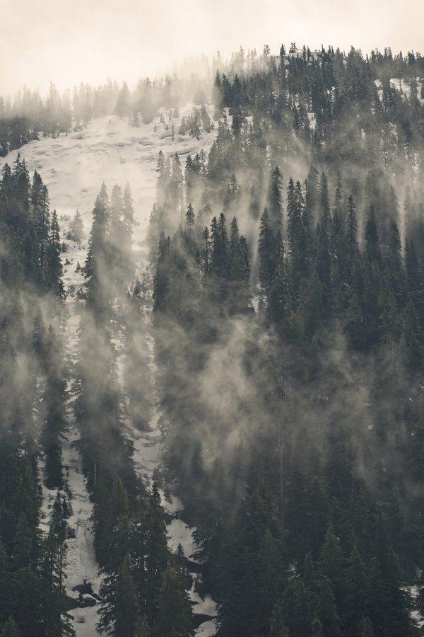 Гуцульська малпа, чугайстер або снігова людина в Карпатах, фото-4