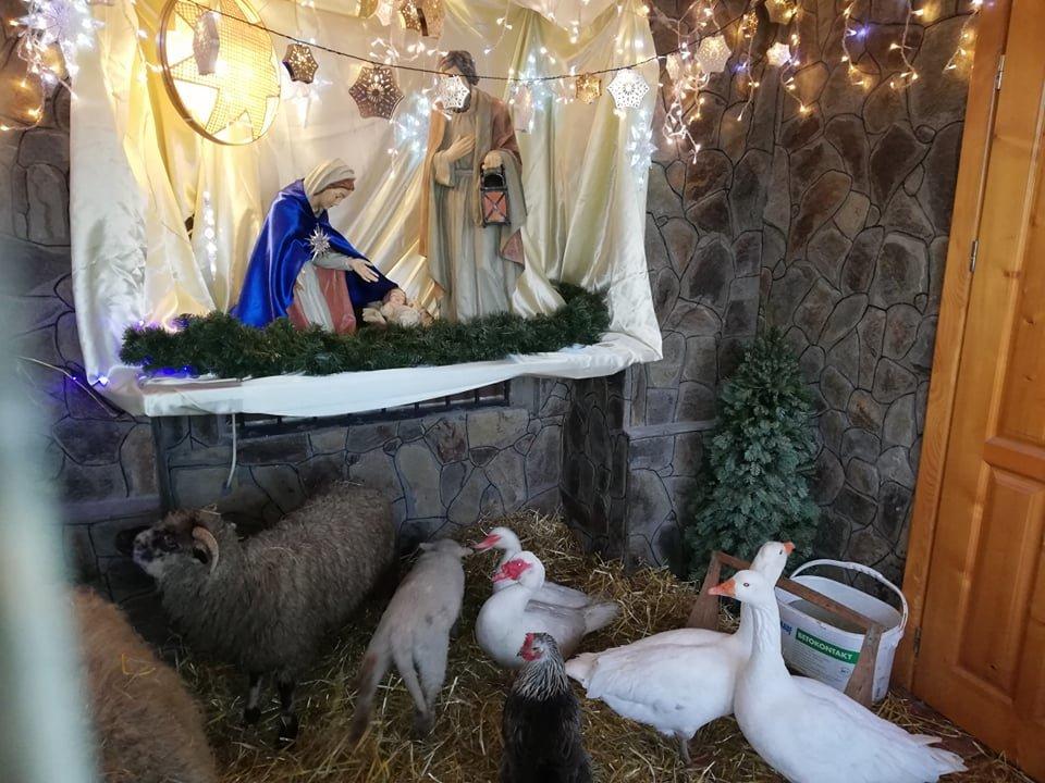 В одній із франківських церков встановили вже традиційну живу шопку (фото, відео), фото-1