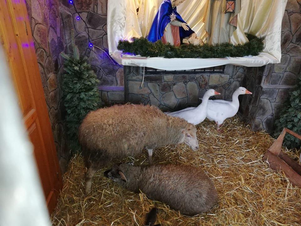 В одній із франківських церков встановили вже традиційну живу шопку (фото, відео), фото-2